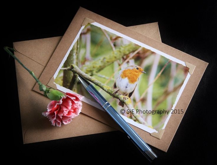 28 best photo note cards images on pinterest photo greeting cards robin photo note card greeting card kraft stationery 6 x 4 glossy print m4hsunfo