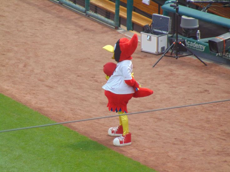 #fred bird #st louis #stadium #stl cardinals