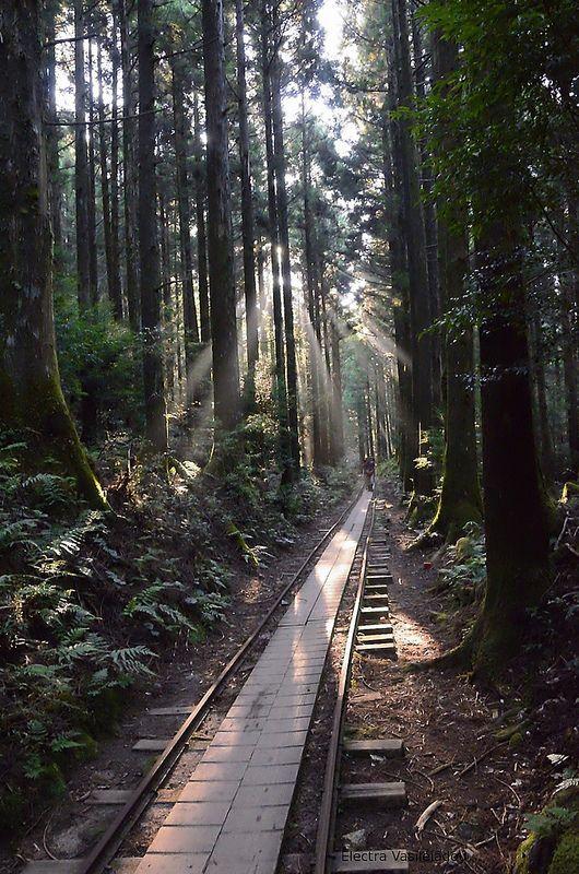 Kusagawa trail, Yakushima, Kagoshima, Japan.  Japan AND train tracks?? Could this picture get any better??