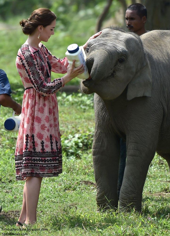 Duchess Kate: Kate in Topshop Pink Print Dress for Unforgettable Day in Kaziranga