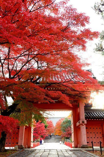 Kyoto, Japan Autumn Leaves