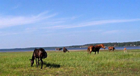 Andelslaget Malmhagens Hästby  Malmhagens hästby är ett bostadsområde i Oravais som skapas med tanke på hästintresserades behov.
