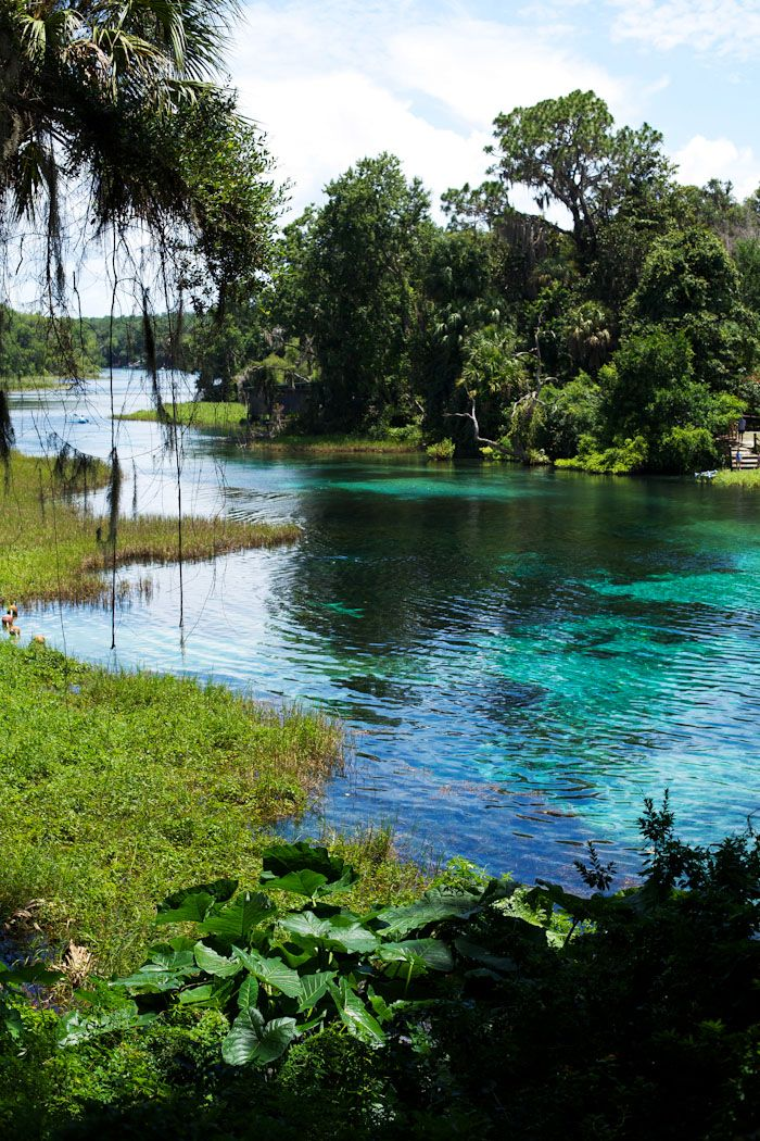 Rainbow River, Florida  Note from Hal:  I have tubed several miles of this river.  A wonderful experience :-)