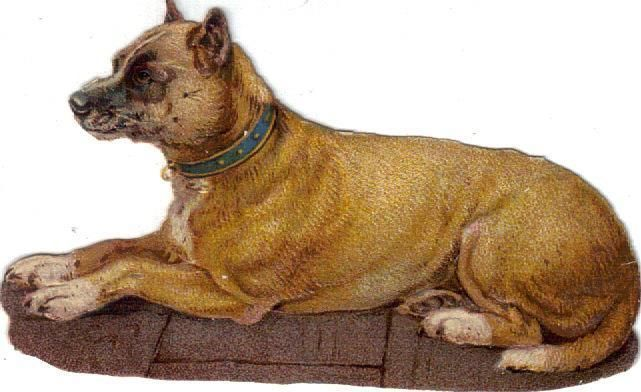Victorian Die Cut Scrap Brown Dog Blue Collar c1880