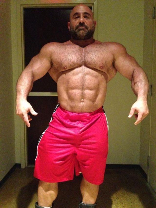 Big muscle bear