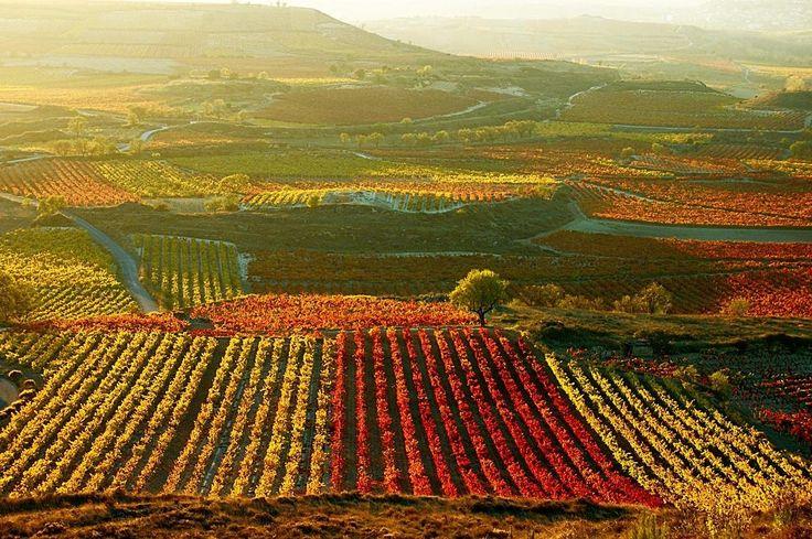 Paisaje de viñedos en la Rioja Alta