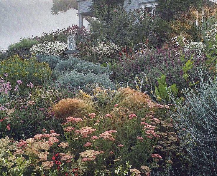 Nassella, achillea, artemesia, society garlic, artichokes, tantacetum niveum, verbascum, stipa gigantea, lavender, several salvias