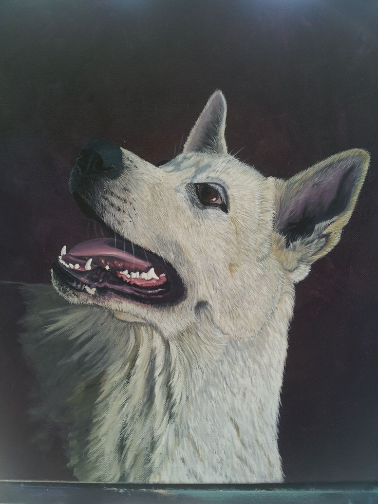 'Koda' To commission a pet portrait drop me a line at new.life1965@hotmail.com Gift vouchers also available
