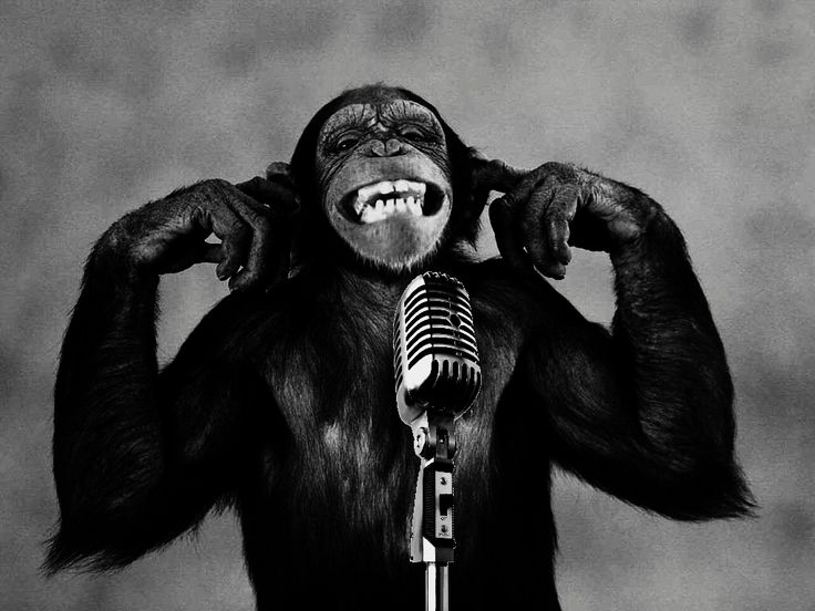 Monkey Wallpaper chimpanzee at microphone | funny wallpapers of monkeys – cute