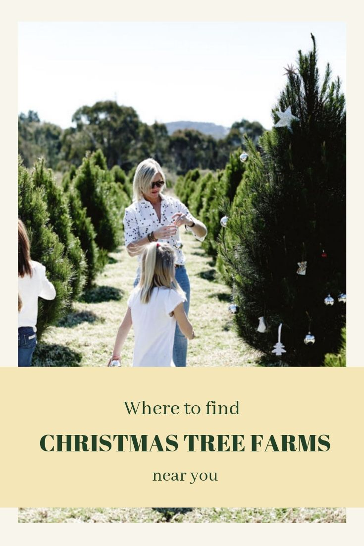 The Best Christmas Tree Farm Near Me In Every State Australian Christmas Tree Christmas Tree Farm Tree Farms