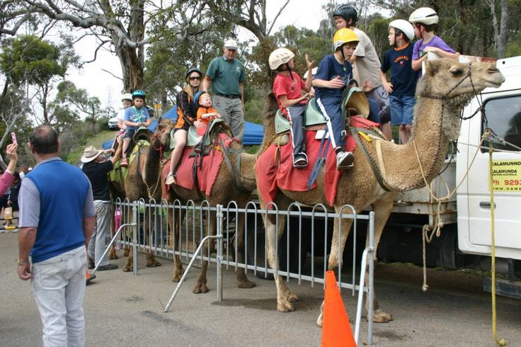 Camel Farm Paulls Valley Perth Hills