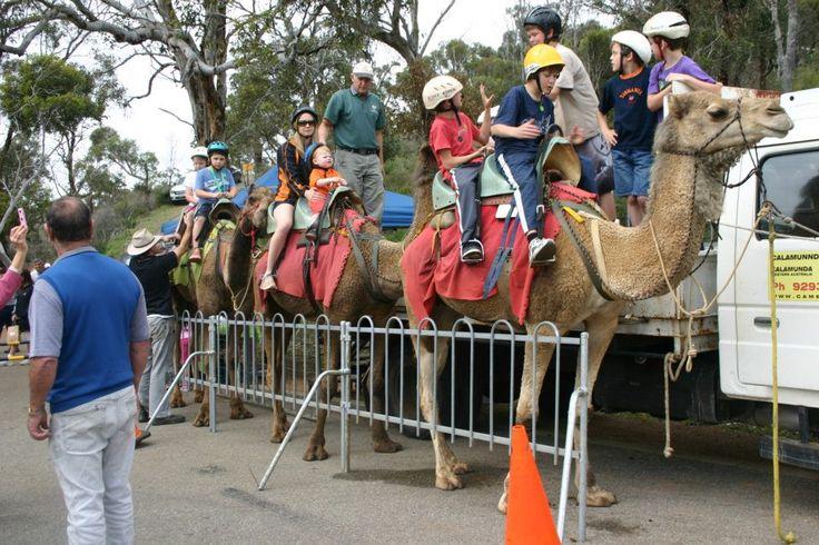 Camel Farm Paulls Valley Perth Hills