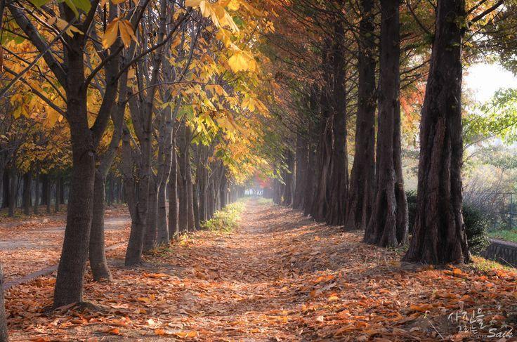 SAIK KIM PHOTOGRAPHY :: 소소한 가을 사진 모음