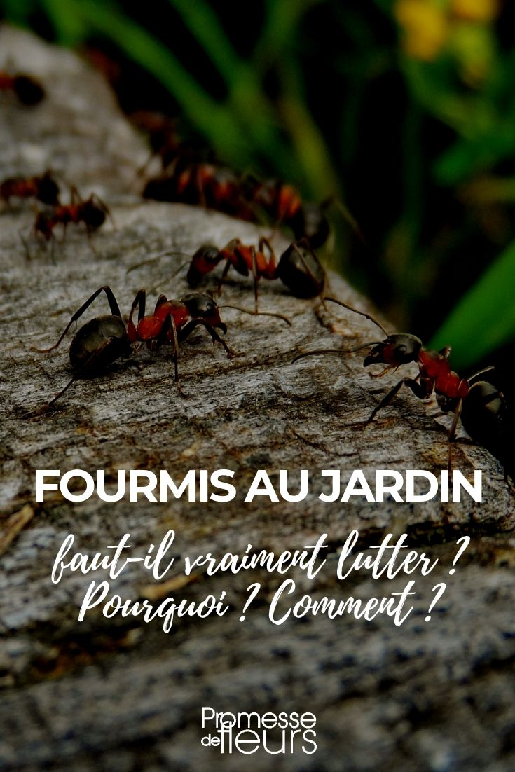 Eloigner Les Fourmis Au Jardin fourmis au jardin : faut-il vraiment lutter ? | jardins