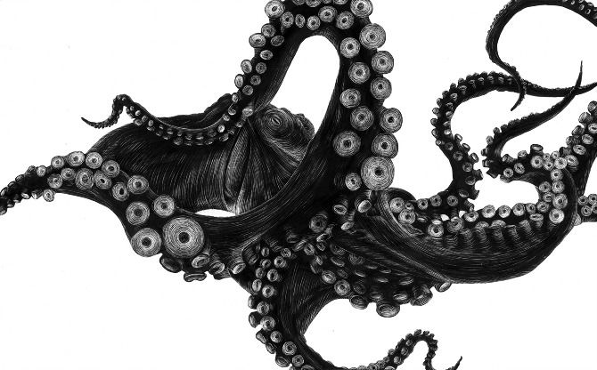The Octopus is a cephalopod mollusc of the order Octopoda. Silhouette painted with india ink onto a clay scratchboard. Detail added using an xacto knife. - Tierra Connor
