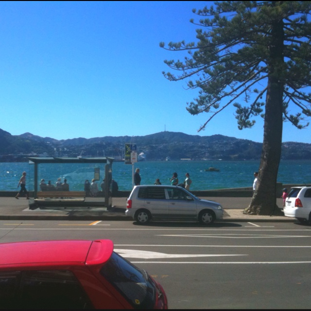 Oriental Bay bathed in sunshine