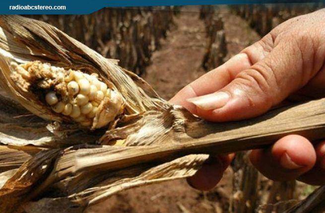 La situación en el campo es difícil por la sequía