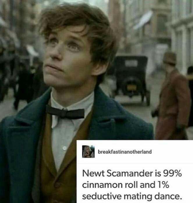 Newt: the Potter-verse cinnamon roll
