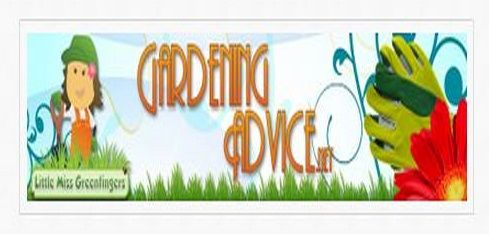 LITTLE MISS GREENFINGERS GARDENING ADVICE - - This site cover a variety of gardening topics including * flowers, * garden trees, * garden shrubs, * roses, * vegetables, * fruits and herbs, along with * indoor plants. the indoor plant section has 12 topics including house plants safe for cats, how to grow a pineapple, various plants & more