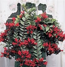 Lipstick Plant (Aeschynanthus radicans): learn how to care for these easy care flowering houseplants: http://www.houseplant411.com/houseplant/lipstick-plant-care