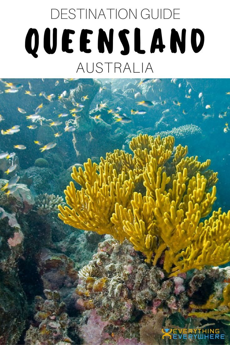A complete guide to travel in Queensland, Australia. Top attractions and things to do including the Great Barrier Reef, Fraser Island, and more + practical tips for your trip.   Everything Everywhere Travel Blog#Queensland #Australia