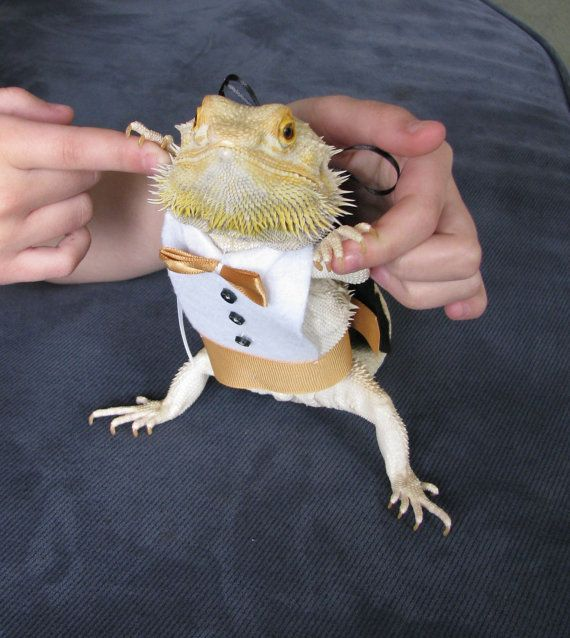 Tuxedo u0026 Matching Top Hat for your Bearded by P&eredBeardies & 24 best Dragon images on Pinterest   Bearded dragon Dragon costume ...