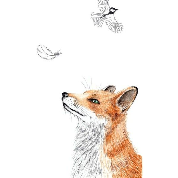 Fuchs Art Print Poster Zeichnung Drucke ❤ liked on Polyvore featuring home, home decor and wall art