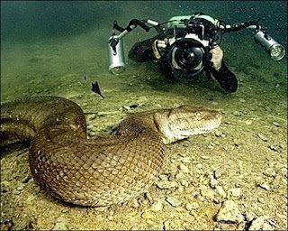 Blog do Bruno - O Portuga: Cobra Gigante - Anaconda Brasileira
