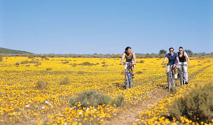 Can you imagine a better place to cycle? In the stunning Karoo when the flowers are in full bloom you get to enjoy one of most unusual wonders ... This you can experience at Bushmans Kloof nature reserve, Cape Town