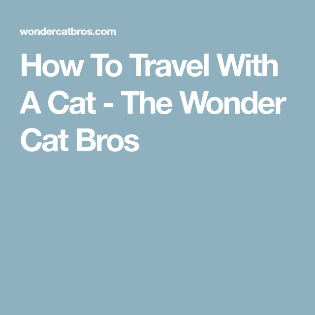 How To Travel With A Cat - The Wonder Cat Bros