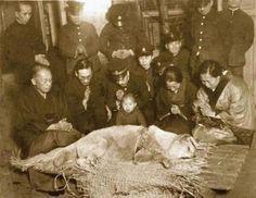 Esta es la última fotografía de Hachikō, el perro japonés de raza akita, recordado por su lealtad a su amo, 1935