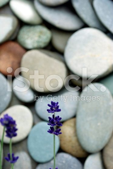 Lavender & River Pebble in very soft focus royalty-free stock photo