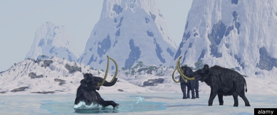 Woolly Mammoth Clone? Russian And South Korean Scientists Sign Deal To Bring Extinct Beast Back To Life...SO IT BEGINS!!!
