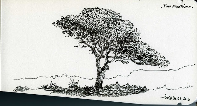 Pine Tree  Lamy Fountain Pen on Bahaus Sketchbook  February 2013