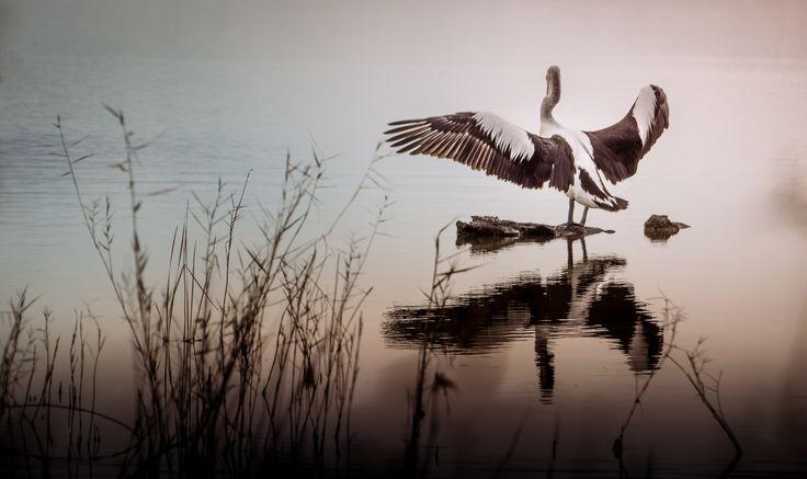 L a k e W a l t z - Lake Bonney, Barmera..South Australia.