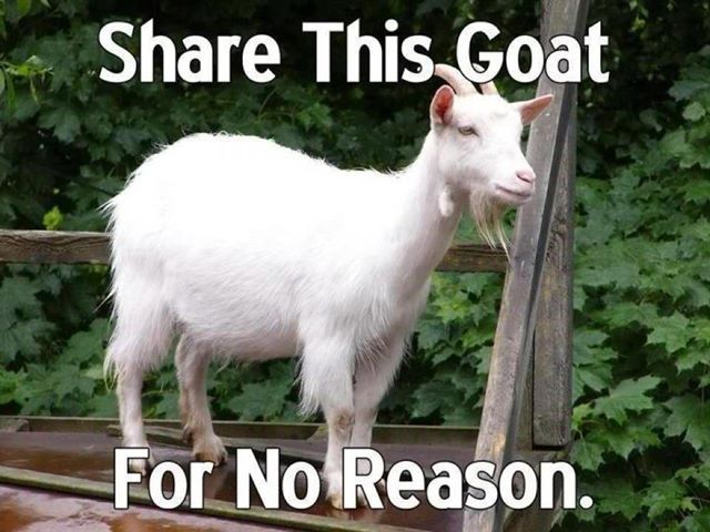share this goat, for no reason #socialmedia