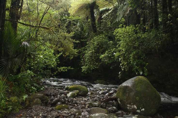 Walking on the Nikau Track - a bush path on the northern slopes of Mt Pirongia. This is a stream beside the path.