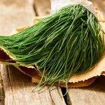 Agretti, come barba di frate o roscani: tanti nomi per lo stesso ortaggio. Con Sale&Pepe scopri i modi migliori per cucinarlo!