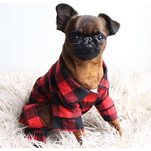 Buffalo Check PJ ❤ liked on Polyvore featuring intimates, sleepwear, pajamas, dog pyjamas, dog pajamas, flannel sleepwear, flannel pyjamas and buffalo plaid pajamas