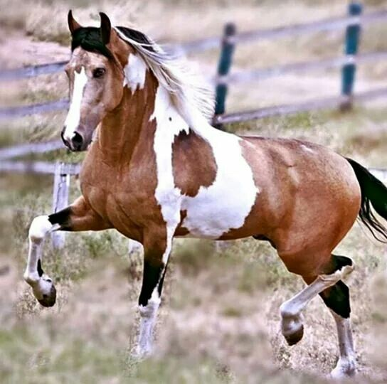 Best Horses Images On   Beautiful Horses Pretty