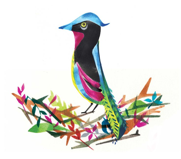 logos for tropical nests - Google Search
