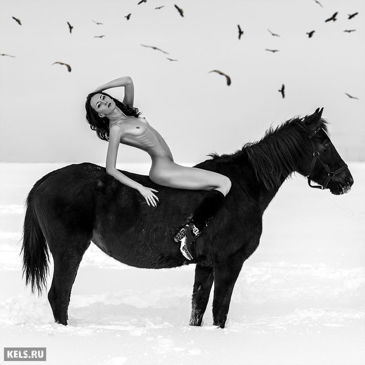 porn man horse