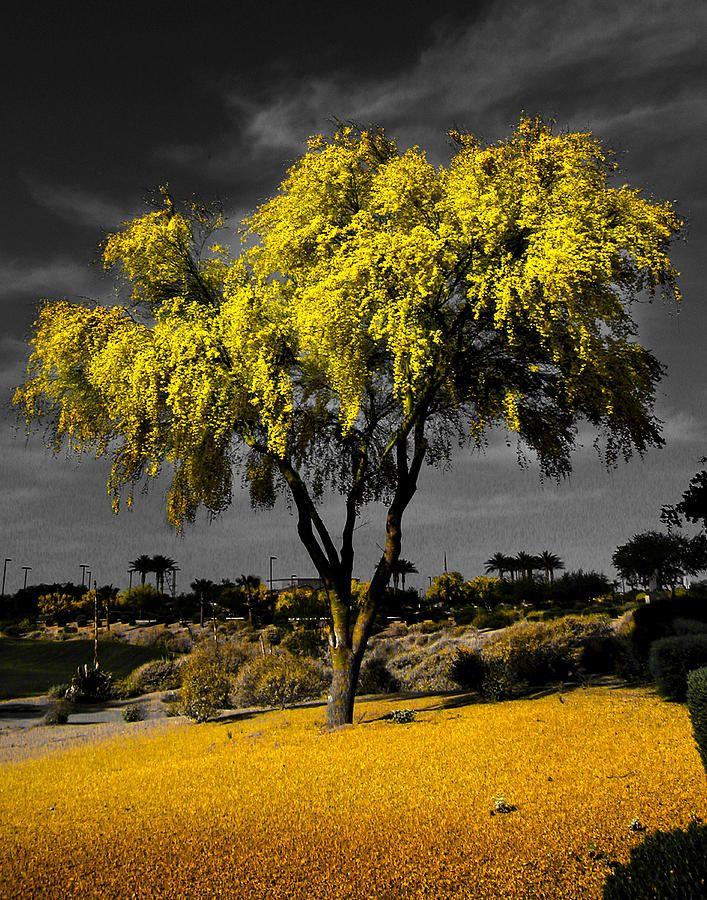 ✮ Palo Verde, AZ