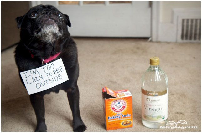 DIY all-natural pet stain and odor removal.