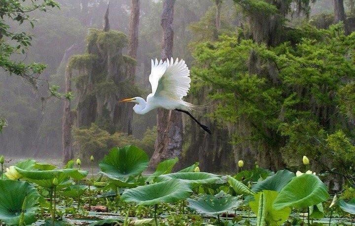 : Amazing Photo, Timeline Photo, Dreams Catcher, Beautiful, Great Lakes, Water Lilies, Animal, Fairies Tales, Lakes Martin