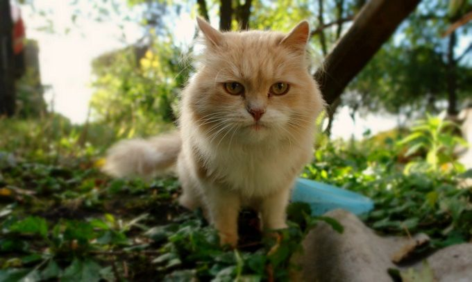 Cat Photography. #poetry #freeimages #freepictures #freephotos #haiku #cat #cats #catphotography #russia #ruralrussia #village #rural
