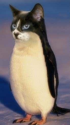penguin cat  animal mashups photoshopped animals weird