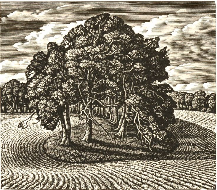 Howard Phipps: A Beech Shaded Hollow, Cranborne Chase. Wood engraving