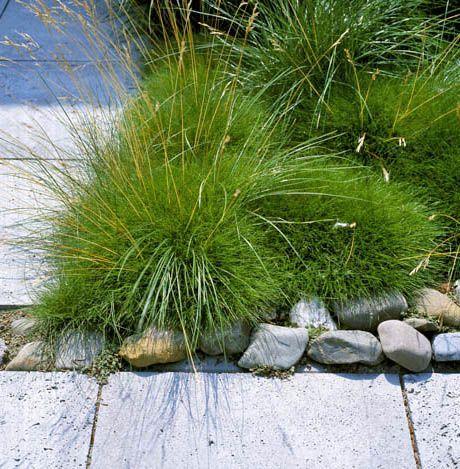 die besten 17 ideen zu gr ser auf pinterest outdoor pflanzen topfpflanzen terrasse und. Black Bedroom Furniture Sets. Home Design Ideas