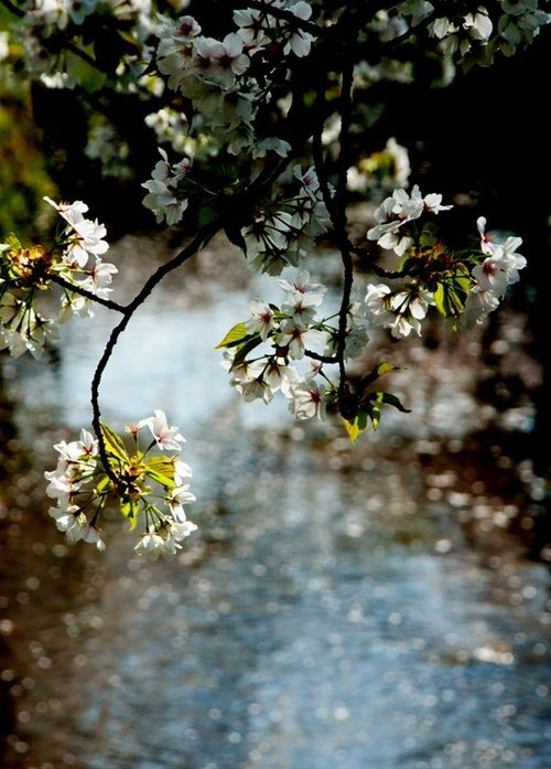 ... a beautiful rain ... 'Don't worry for soon the grey clouds will be gone and light will shine in your life once more.'  X ღɱɧღ